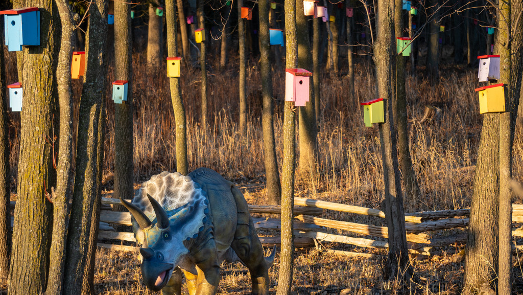 birdhouse forest by bmaddock