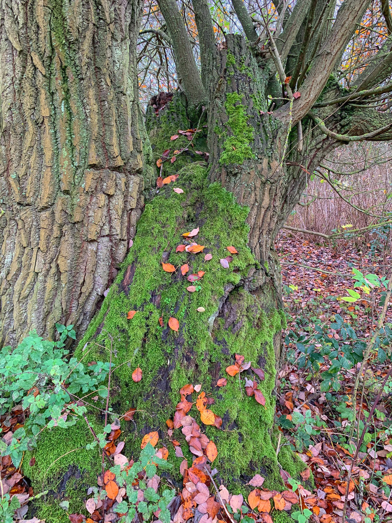 Moss on the tree by pamknowler