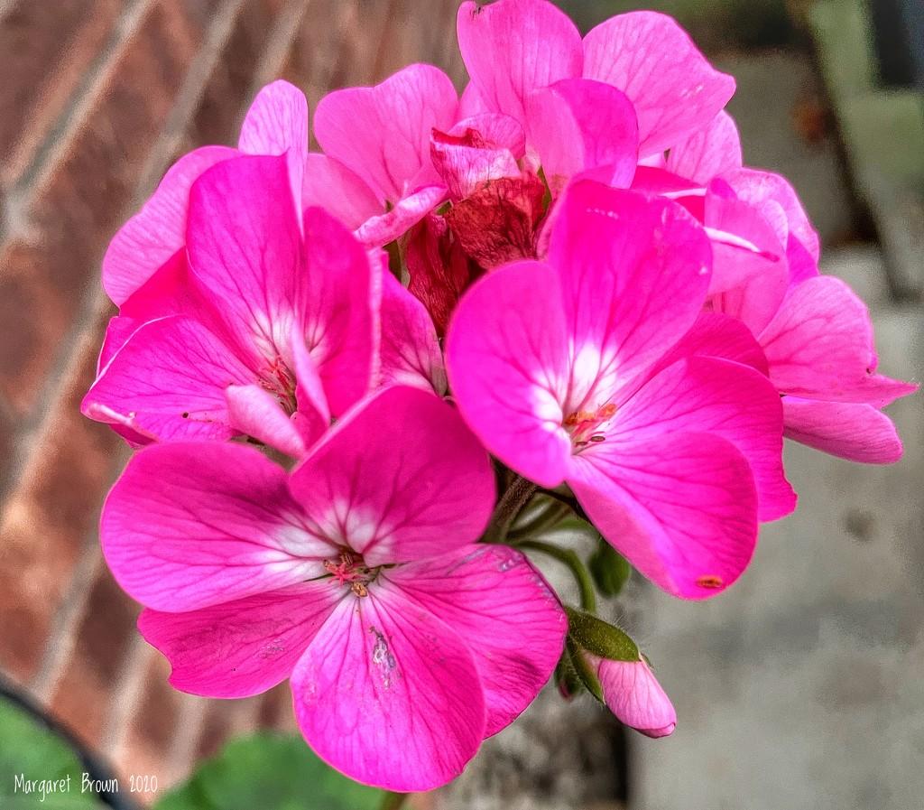 Very pink! by craftymeg