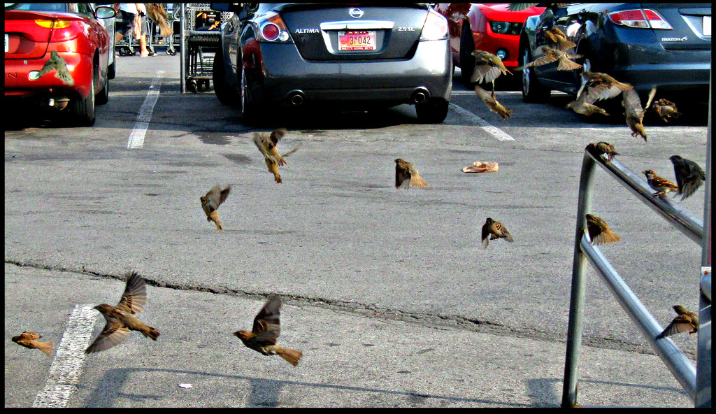 The Birds Took My Parking Spot by moviegal1