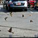 The Birds Took My Parking Spot