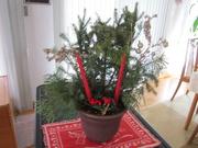 30th Nov 2020 - Grace's Christmas decoration