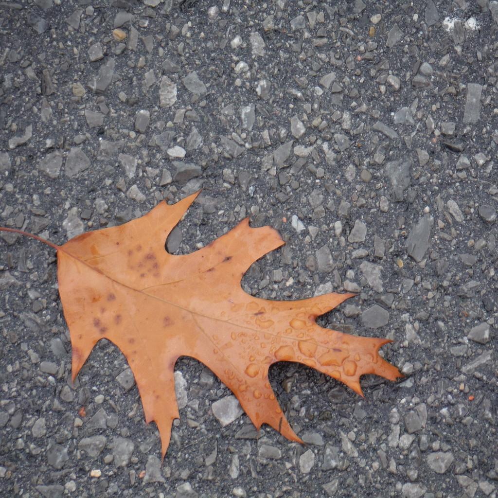 Leaf by spanishliz
