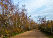 29th Nov 2020 - Our nature reserve