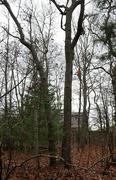 30th Nov 2020 - Tree trimmer........