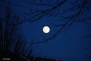 30th Nov 2020 - Full moon coming up