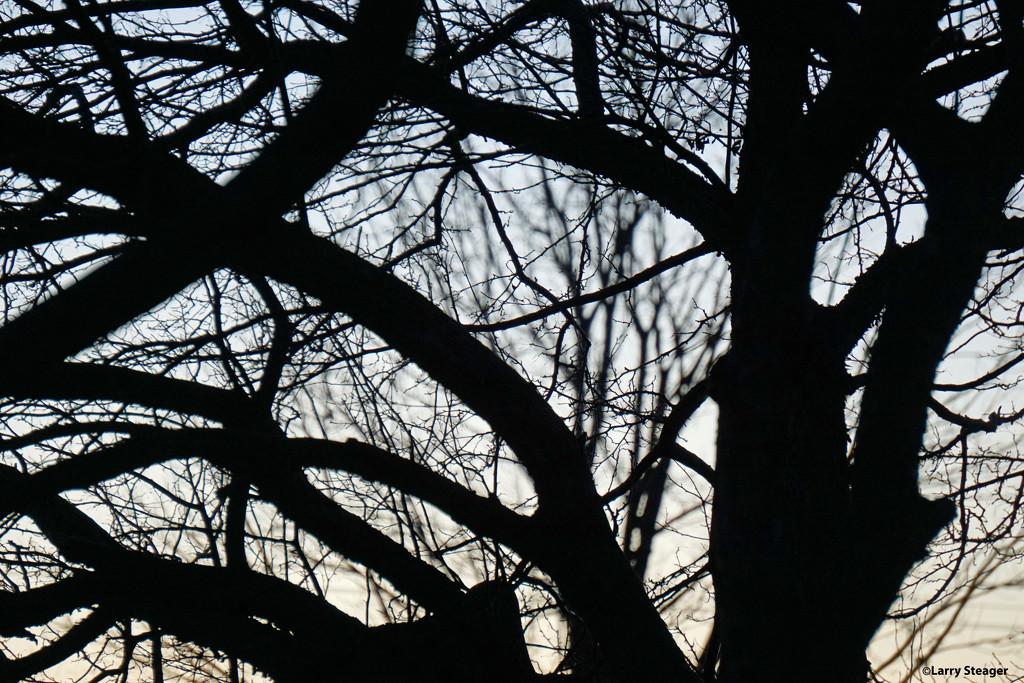 Dusk through the tree by larrysphotos
