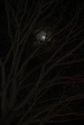 30th Nov 2020 - child moon