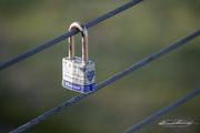 30th Nov 2020 - Love on Lock Down