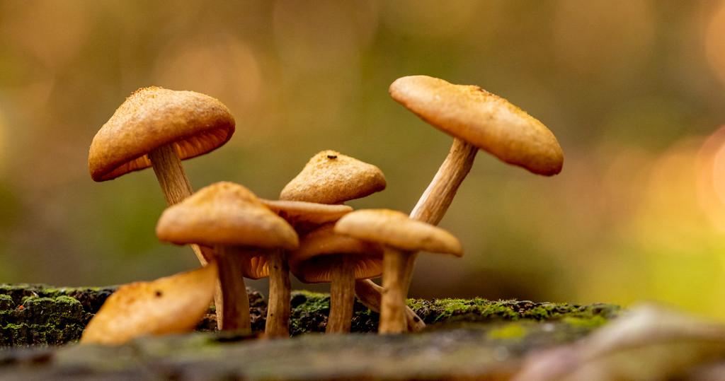 More Fungi! by rickster549