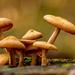 More Fungi!