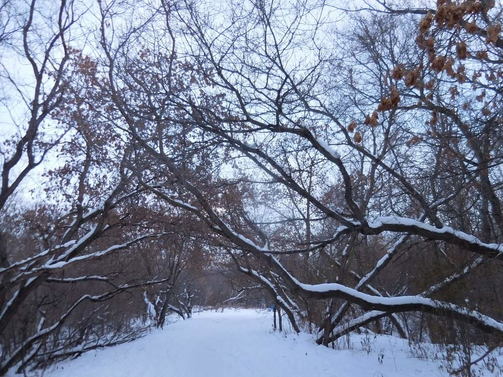 Winter Wonderland  by bkbinthecity
