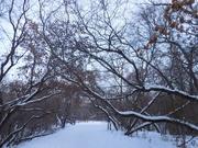 30th Nov 2020 - Winter Wonderland