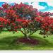 New   Zealand Christmas tree. Pohutukawa.. by julzmaioro