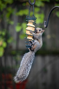 5th Oct 2020 - Here's how to eat while holding on securely . . .