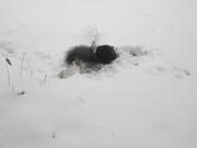 1st Dec 2020 - Oh no - snow again - what's next