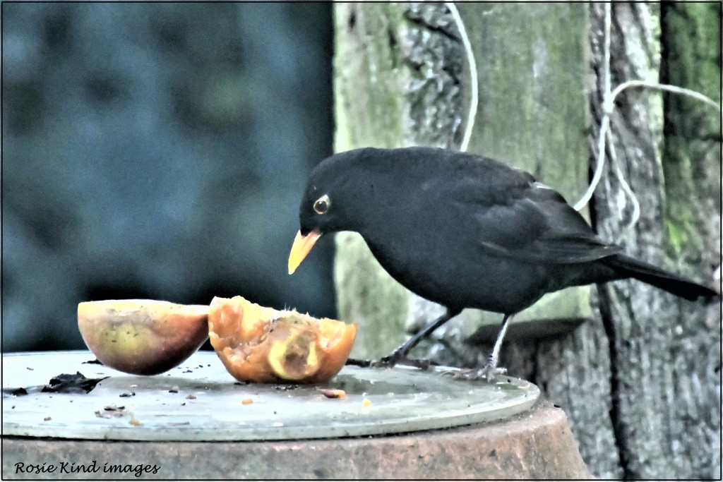 I love yummy apples by rosiekind