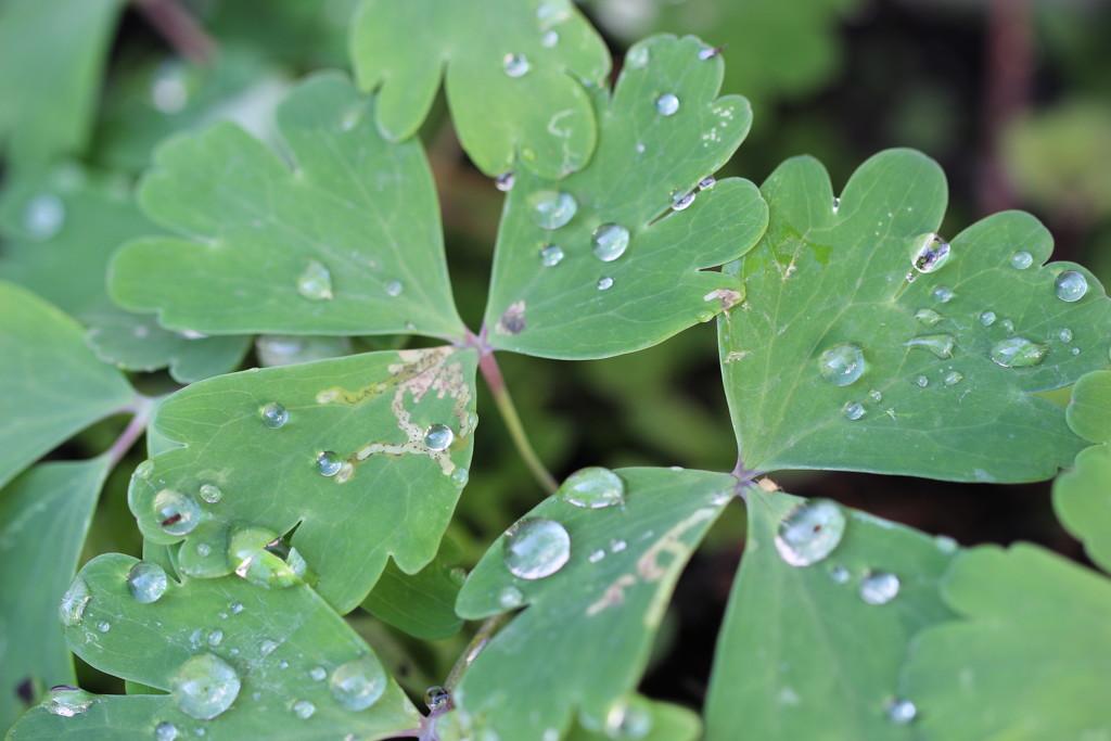 Raindrops by jb030958
