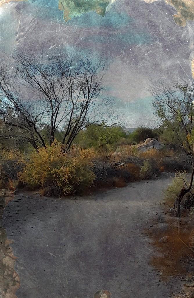 desert trail by blueberry1222