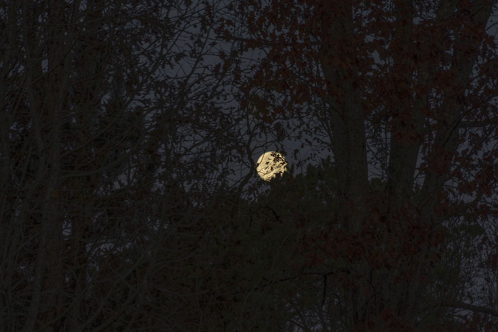 Beaver Moon by k9photo