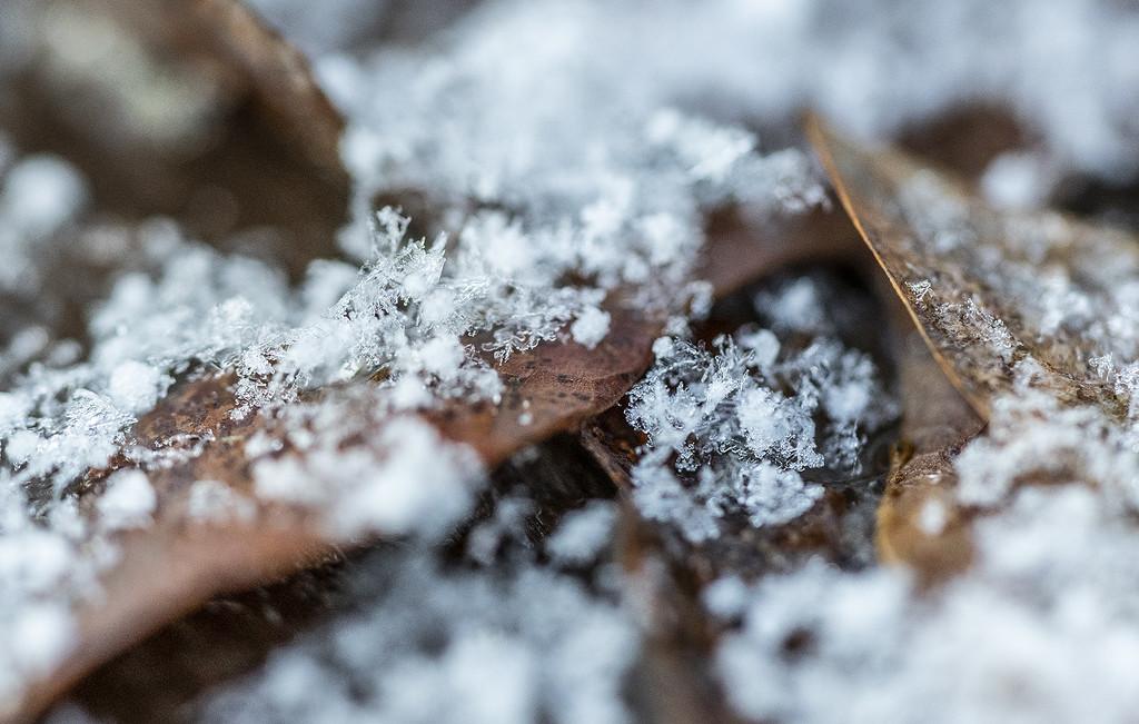 Tis the Season by k9photo