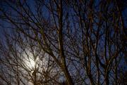30th Nov 2020 - Beaver Moon