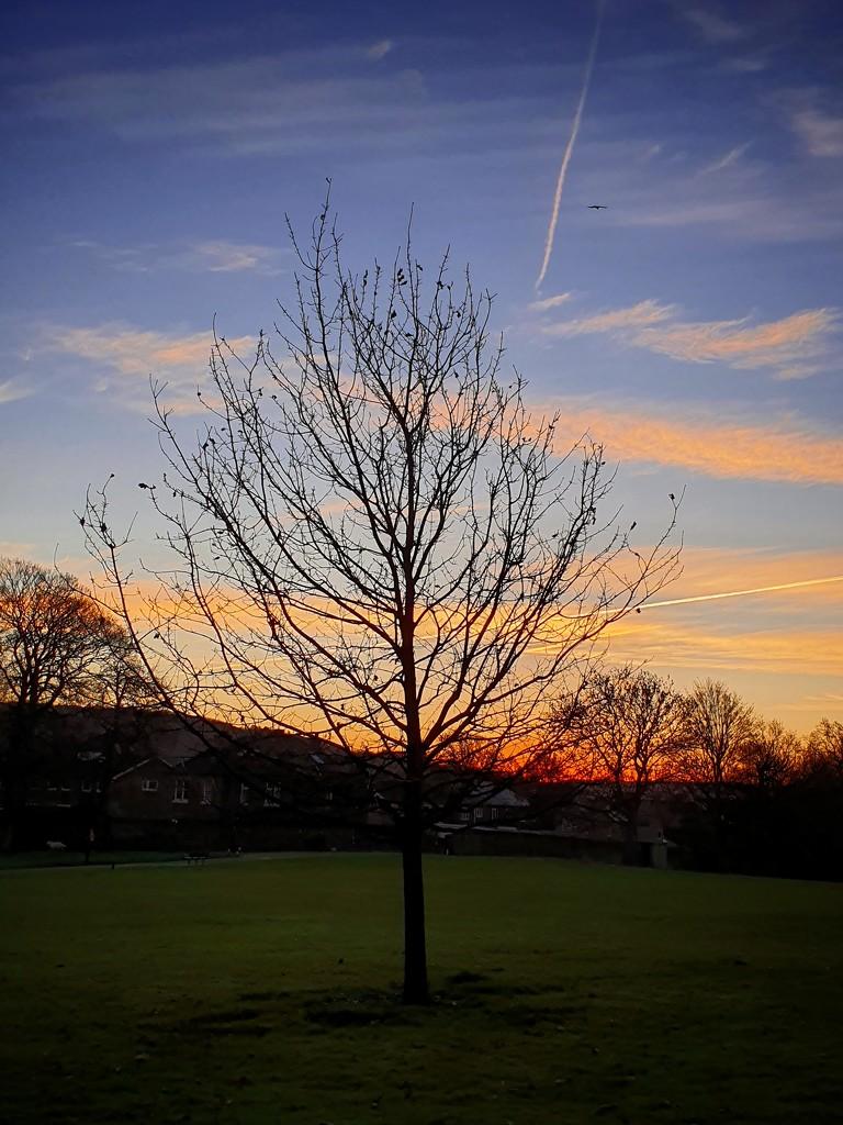 Sunrise  by isaacsnek
