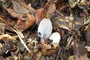 1st Dec 2020 - little mushrooms