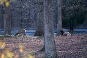 1st Dec 2020 - US Army Elk - Resupplied