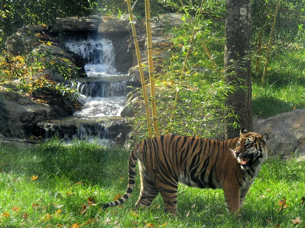 I'd Rather Have Another Tiger Than a Waterfall  by moviegal1