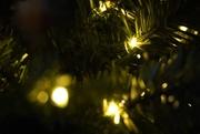 1st Dec 2020 - Stock-ish Tree Lights