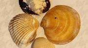 1st Dec 2020 - Shells!
