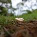 Just a little mushroom