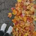 Leaves 11 - Fall 2020