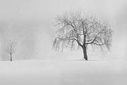 2nd Dec 2020 - 2020-12-02 snow whirls