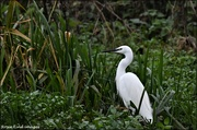 2nd Dec 2020 - It was nice to see the egret too