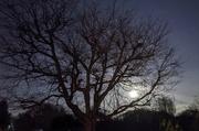 1st Dec 2020 - Rising Moon