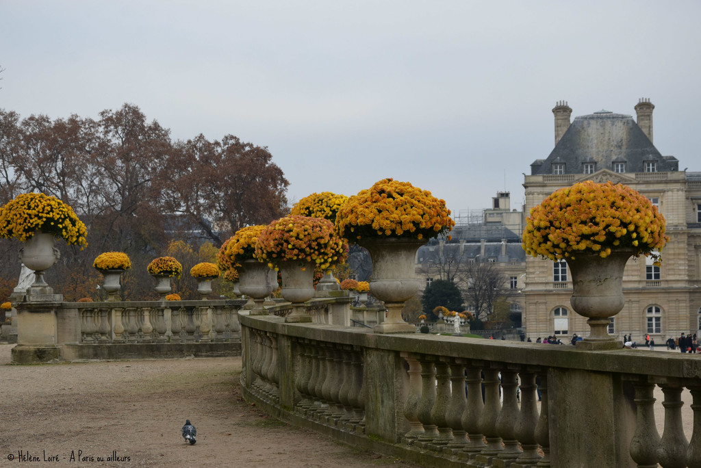 Jardin du Luxembourg by parisouailleurs