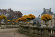 29th Nov 2020 - Jardin du Luxembourg