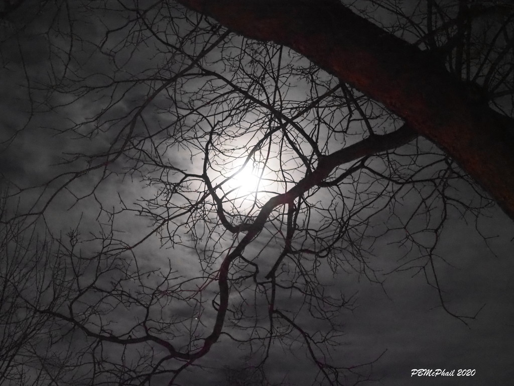 'Twas in the Moon of Wintertime.... by selkie