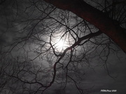 30th Nov 2020 - 'Twas in the Moon of Wintertime....