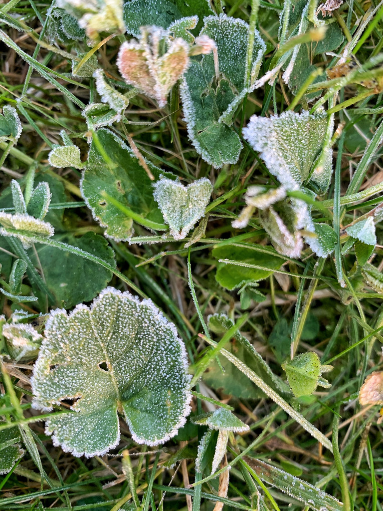 Frozen heart leaf.  by cocobella