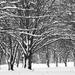 Snow covered forest in black and white
