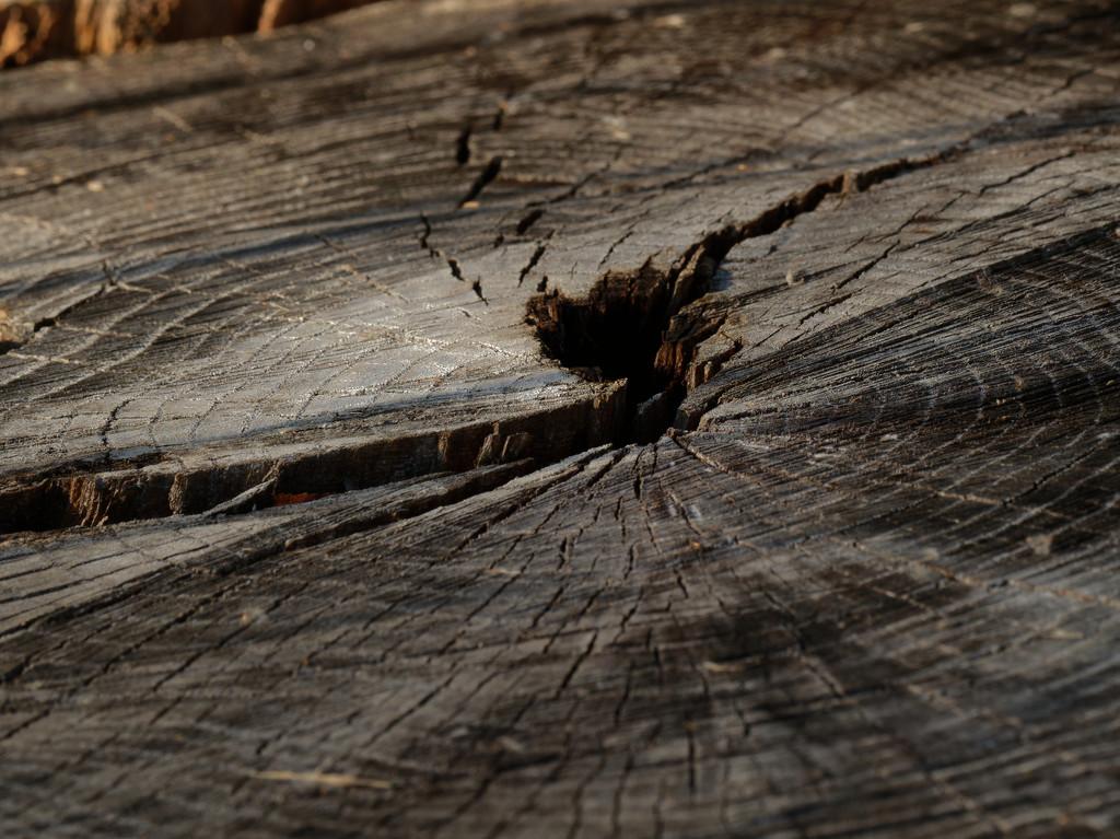 stump by rminer