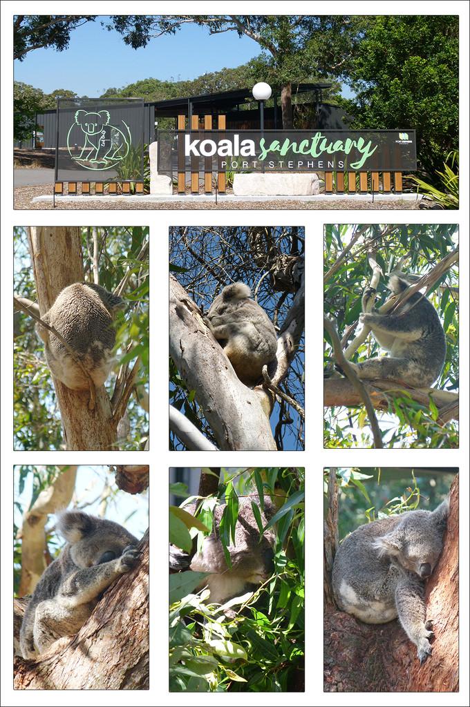Koala Sanctuary  by onewing