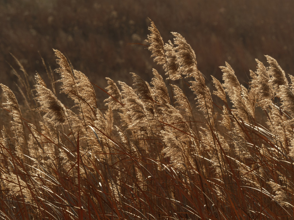 reeds by rminer