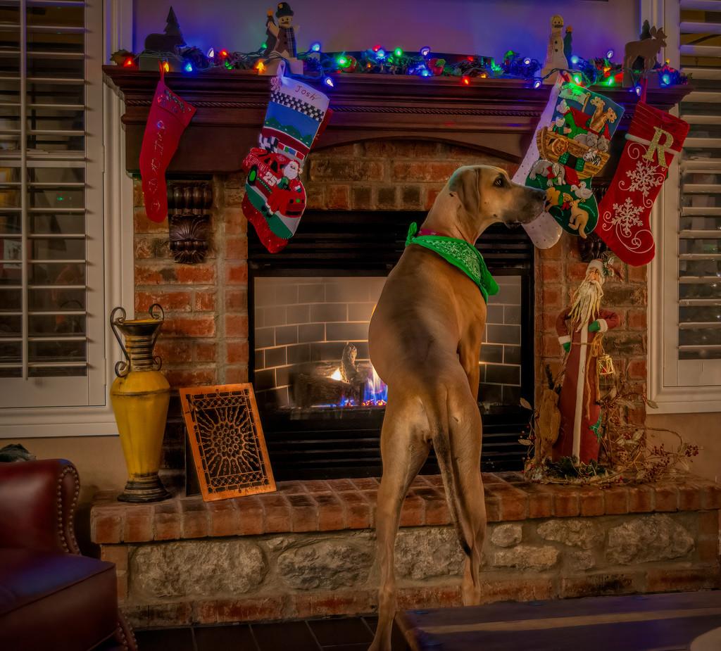 When is Santa coming? by samae