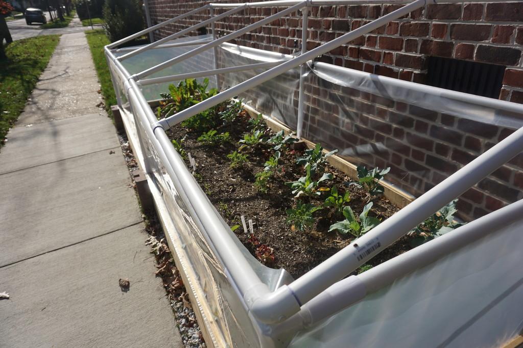 Sidewalk Garden Still Going Strong by allie912
