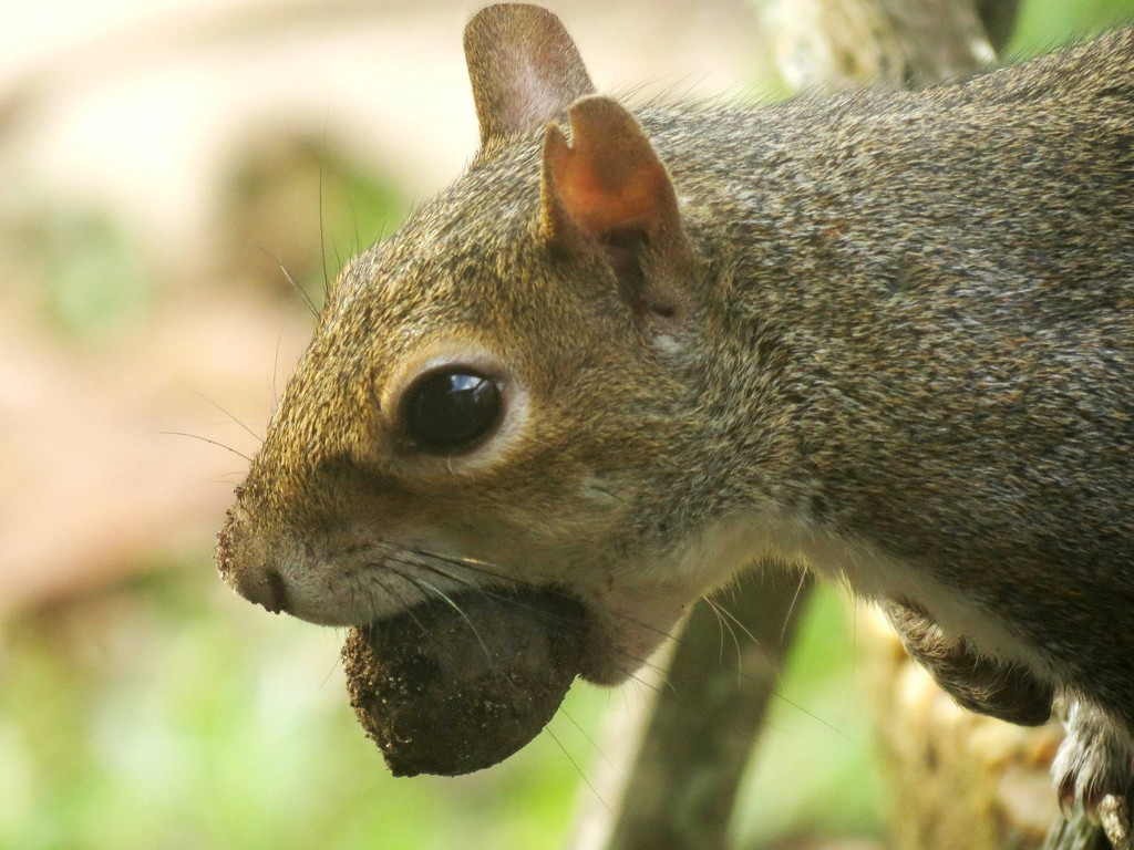 Awww, Nuts! by grammyn