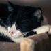 Sleepy Freddie
